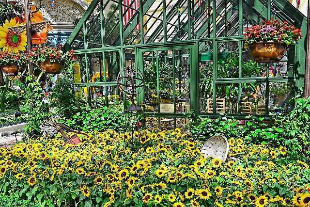 activite bellagio conservatory botanical gardens las vegas