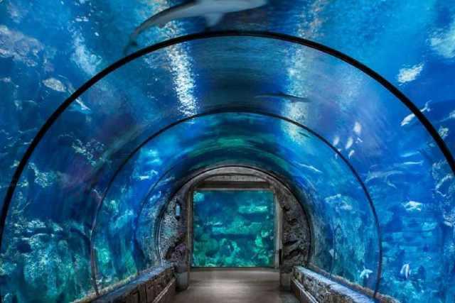 activite las vegas shark reef aquarium mandalay bay las vegas