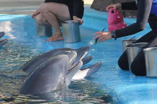 activite secret garden dolphin habitat mirage las vegas