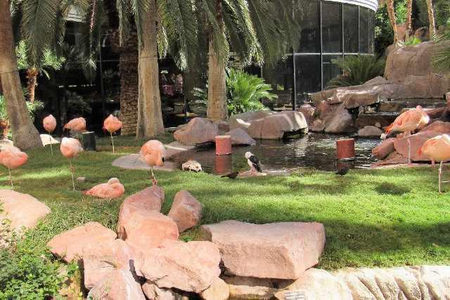 activite wild life habitat flamingo las vegas